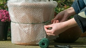 Clever uses for bubble wrap